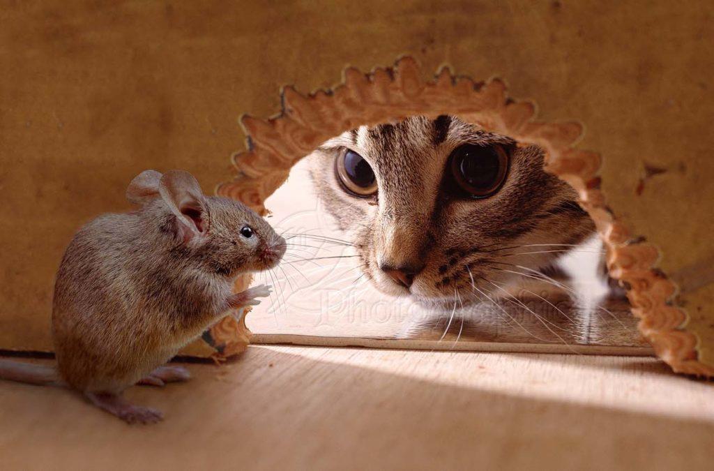 Лучшая защита от мышей в доме