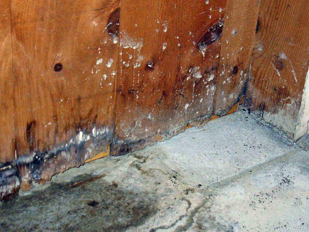 Повышенная влажность - первопричина гниения древесины